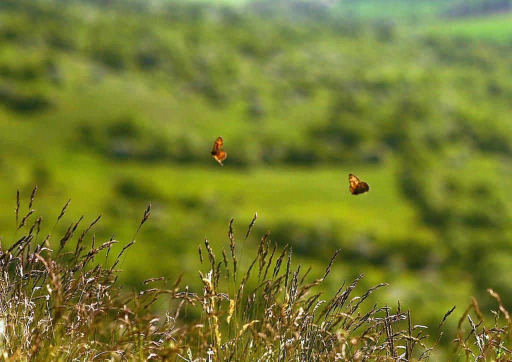 butterflies-1684541_1280